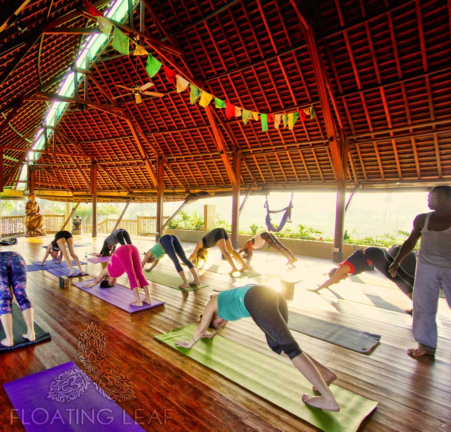 Experience luxury accomodation during your Bali Retreat with afrikanblues.com. Activities such as Floating leaf yoga is only one of the many treats that awaits you.