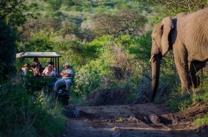 Check out this exceptional African Safari Experience! Book your trip now, just contact afrikanblues.com