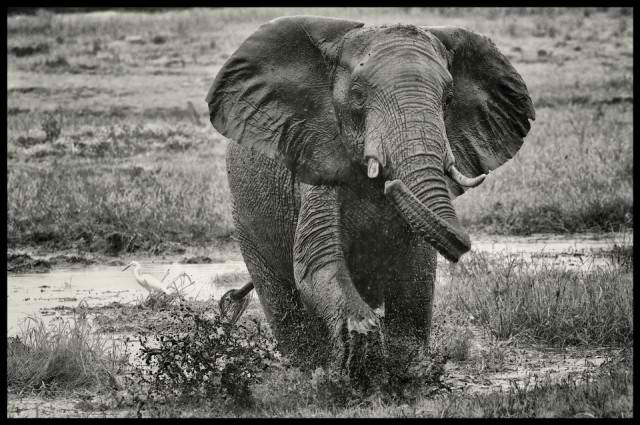 Check out awesome wildlife photography tips in afrikanblues.com blog.