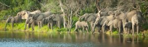 Experience South Africa Safari Yoga with these incredible Savuti Elephants. Contact afrikanblues.com and give yourself a relaxing treat.