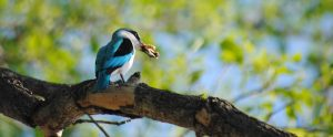 Enjoy bird-watching in Mohlabetsi Lodge. Read about it on afrikanblues.com.