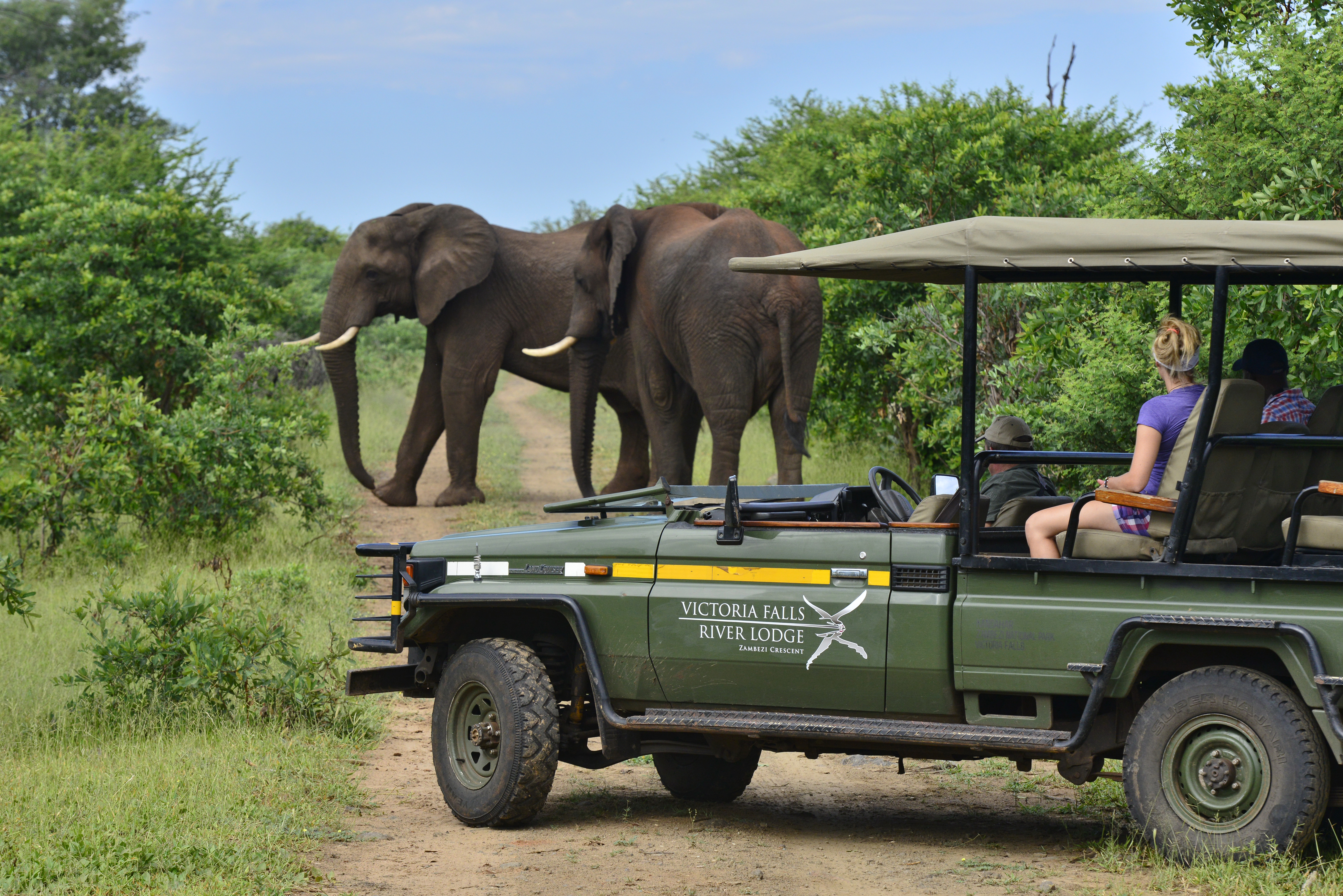 Victoria Falls River Lodge Game Drive.jpg