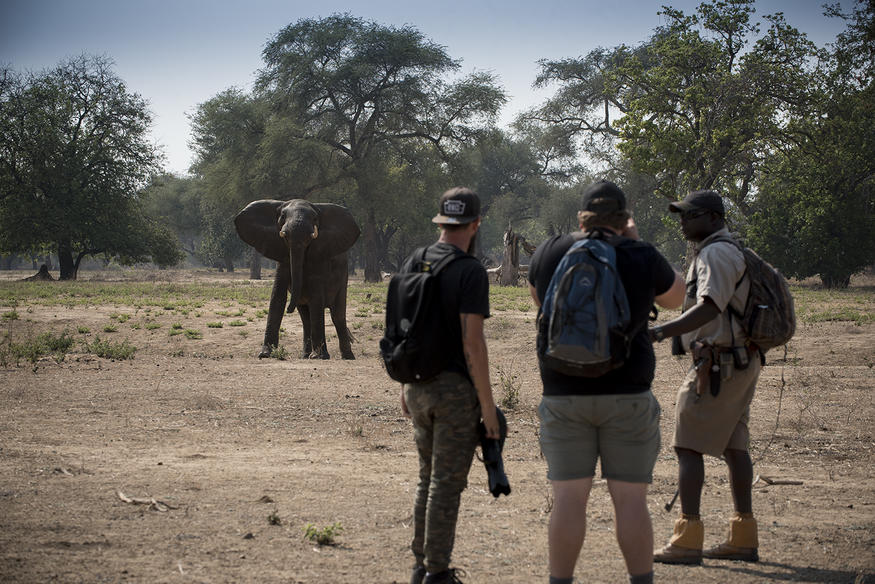 Zambezi Expeditions Walking
