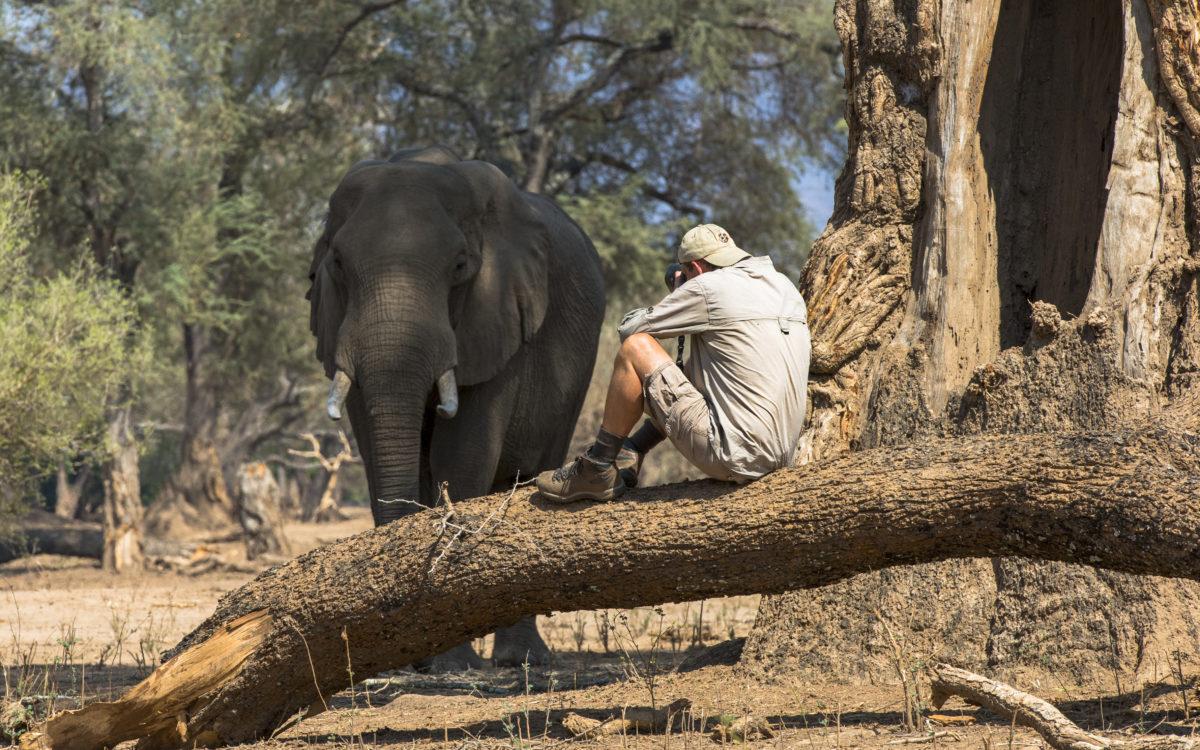 Nick Dyer Safari